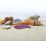 Sand with sea shell. Sand background with sea shell Royalty Free Stock Photo