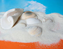 Sand with sea shell. Sand background with sea shell Royalty Free Stock Image