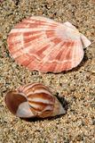 Sand and Sea Shell Royalty Free Stock Images