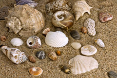 Sand and sea shell. Close up of beach sand and sea shell Stock Photo