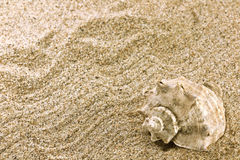 Sand and sea shell Stock Images