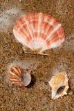 Sand and Sea Shells Royalty Free Stock Photos