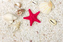 Sand and sea shells background. Royalty Free Stock Photo