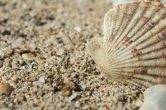 Sand and sea shells Stock Photo