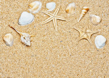 Sand and sea shells frame stock image