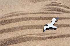 Sand. Seagull in flight. royalty free stock photography