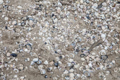Sand and seashell wallpaper. Scattered seashells on a sand surface Royalty Free Stock Image