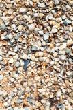 Sand and seashells - beach of Azov Sea close up Stock Images
