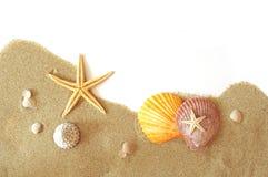 Sand and seastar border. Beach sand, shells and seastar border on white Stock Image