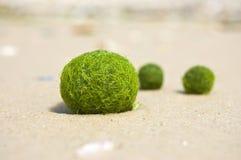 sand seaweed royaltyfri foto