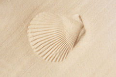 Sand shell Stock Photography