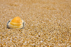 Sand and  shell Royalty Free Stock Photos