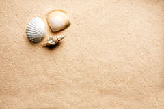 Sand Shell Background Stock Photos