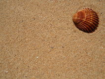 Sand and shell, for background Royalty Free Stock Image