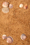 Sand and shell frame. Bright sand and shell frame Royalty Free Stock Image