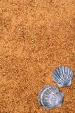 Sand and shell frame Stock Photography
