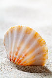 Sand And Shell Royalty Free Stock Photography