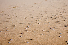 Sand and shell texture. Sand and shells after water gone Stock Photography