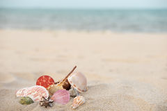 Sand-shell Royalty Free Stock Photography