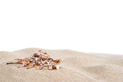 Sand and shell. On white background Stock Photos