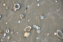Sand with shells Stock Images