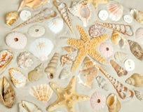 Sand and shells Stock Image