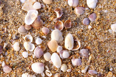 Sand and shells Royalty Free Stock Photo