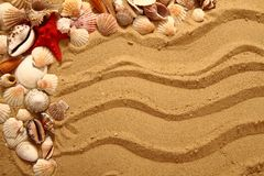 Sand and shells as very nice background Stock Image