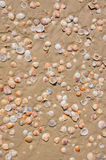 Sand and shells background Royalty Free Stock Images