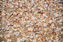 Sand and shells background Stock Image