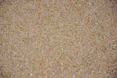 Sand and shells background Stock Images