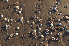 Sand and shells. On the beach at low tide left some shells Stock Photos