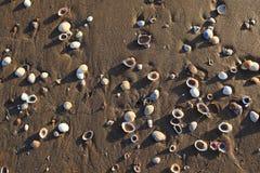 Sand and shells Stock Photos