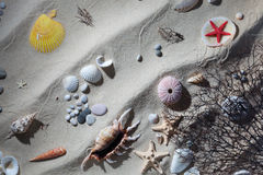 Sand shells and starfish. An assortment of objects that can be found when beach-combing on the seashore Stock Photos