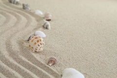 Sand and shells Stock Images
