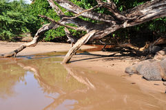 Sand shore river. River with a sand shore and a dead tree reflection on water Stock Image