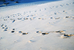 Sand slope with lines of footprints Stock Photos