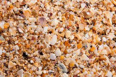 Sand of small shells on the coast as background closeup stock photo