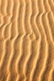 Sand Snakes Stock Photos