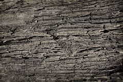 Sand soil dirt texture background crack faults. Blank space. Grunge background. Close up. Design element. Empty space royalty free stock photos