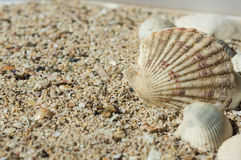 Sand and some sea shells. Close up Royalty Free Stock Images