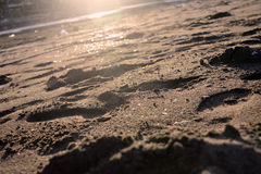 Sand. Some trails and mark on the beach sand Royalty Free Stock Photo