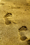 Sand-Spur Stockfotografie