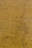 Sand-Spur Lizenzfreie Stockfotos