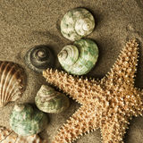 Sand starfish. Starfish and shells in the sand Royalty Free Stock Photography