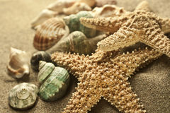 Sand starfish. Starfish and shells in the sand Stock Photo