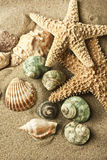 Sand starfish. Starfish and shells in the sand Royalty Free Stock Images