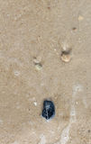 Sand and stone on the beach Royalty Free Stock Photos