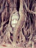 Sand stone Buddha head. In ancient city Mahatat Temple Ayuttgaya Stock Photography