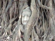 Sand stone Buddha head. At Mahatat temple in Ayutthaya Thailand Royalty Free Stock Photography